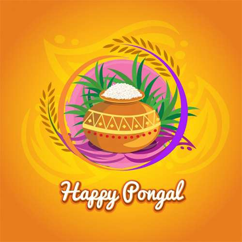 Happy Pongal Greeting Cards
